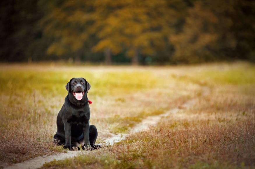 dog path on lawn