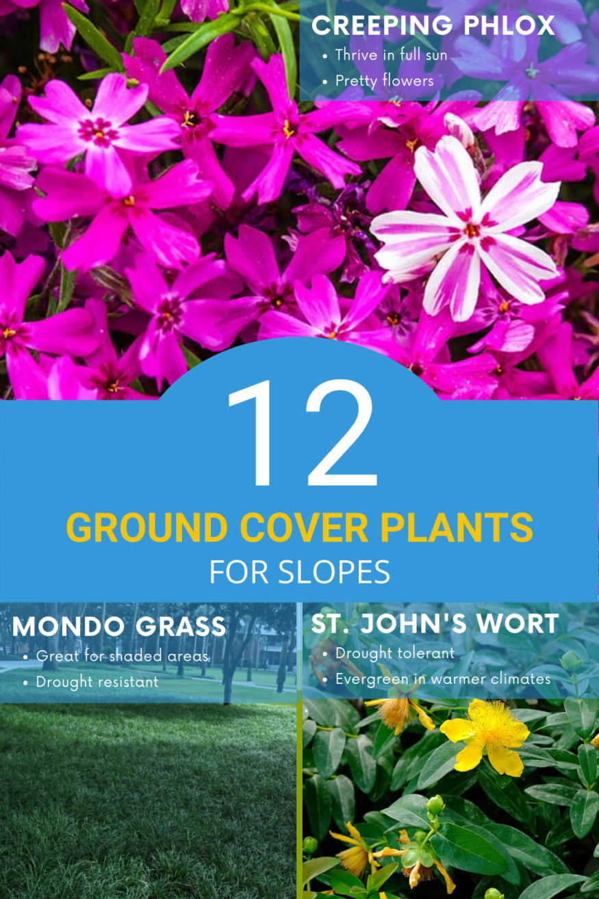 12 ground cover plants for slopes