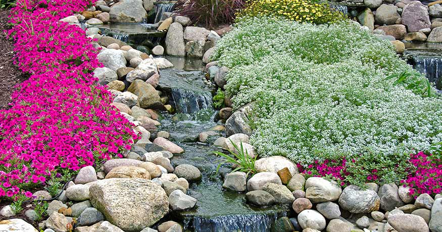 best ground cover for slopes