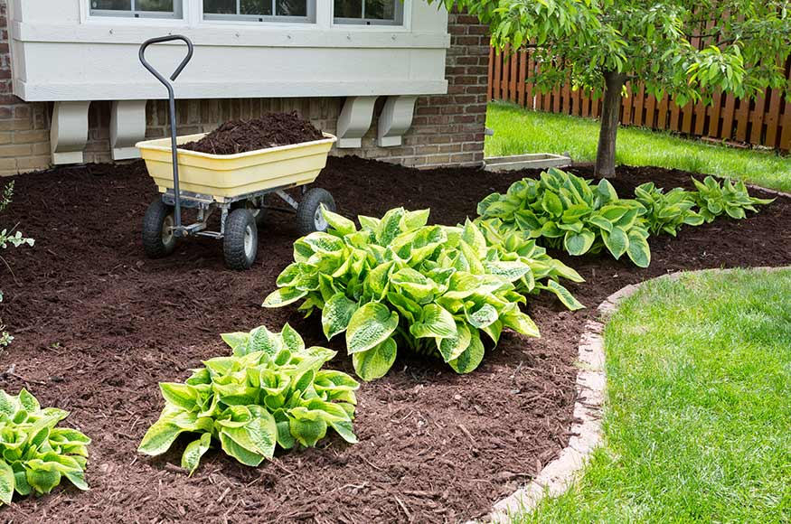 spreading mulch in garden
