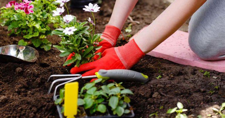 best garden kneeler - feature image