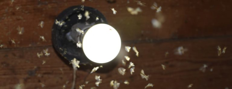 Outdoor Lighting That Doesn't Attract Bugs