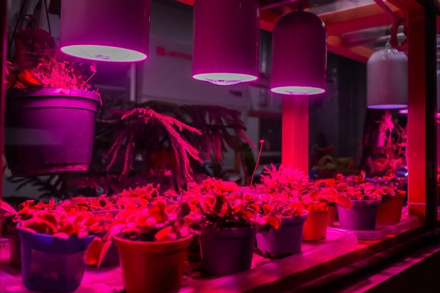 greenhouse with grow lights