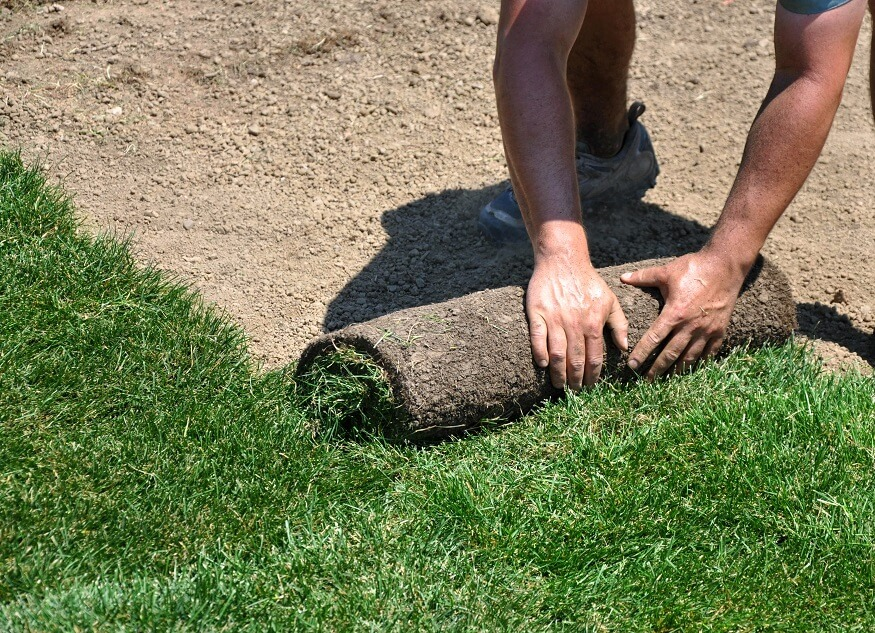 Laying sod on a sandy soil
