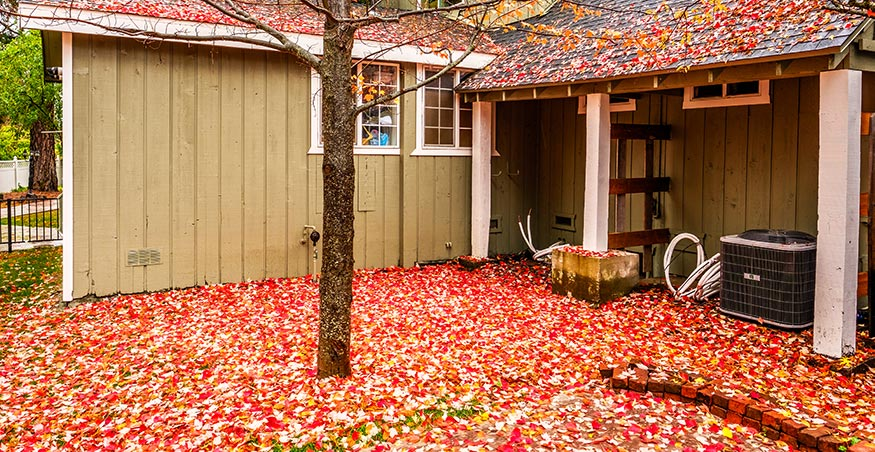 backyard in fall