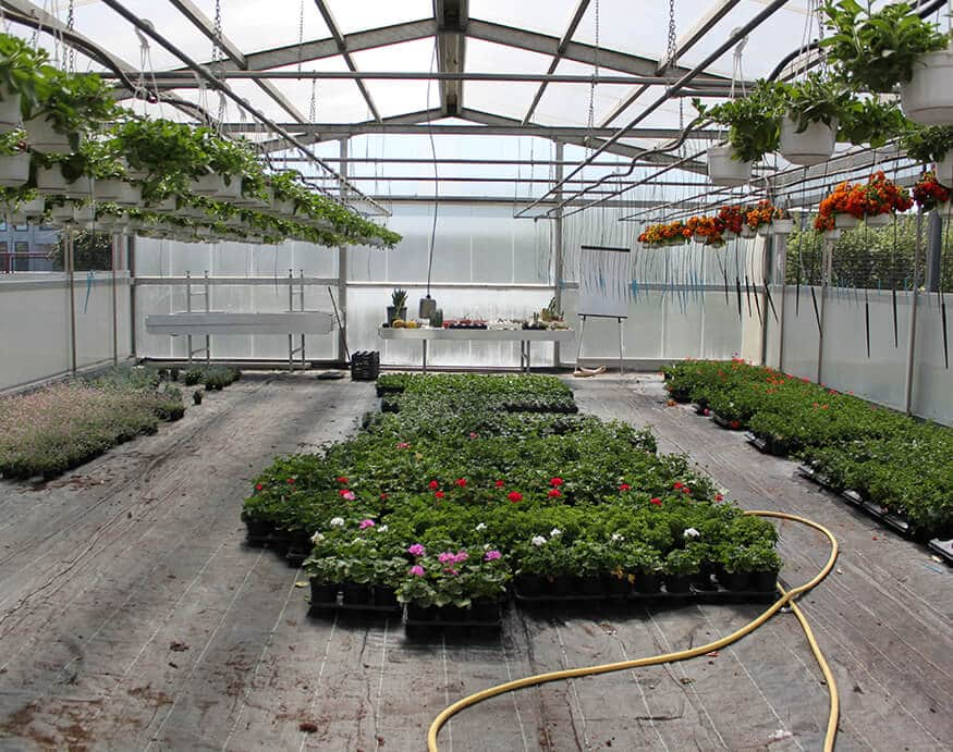 growing flowers inside a greenhouse