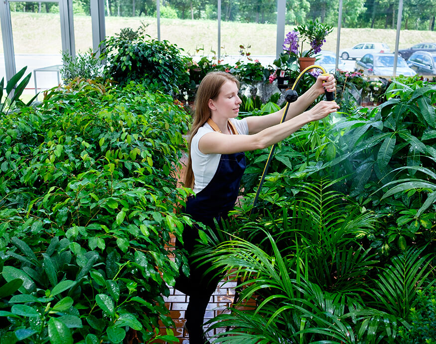 young woman watering plants in the greenhouse