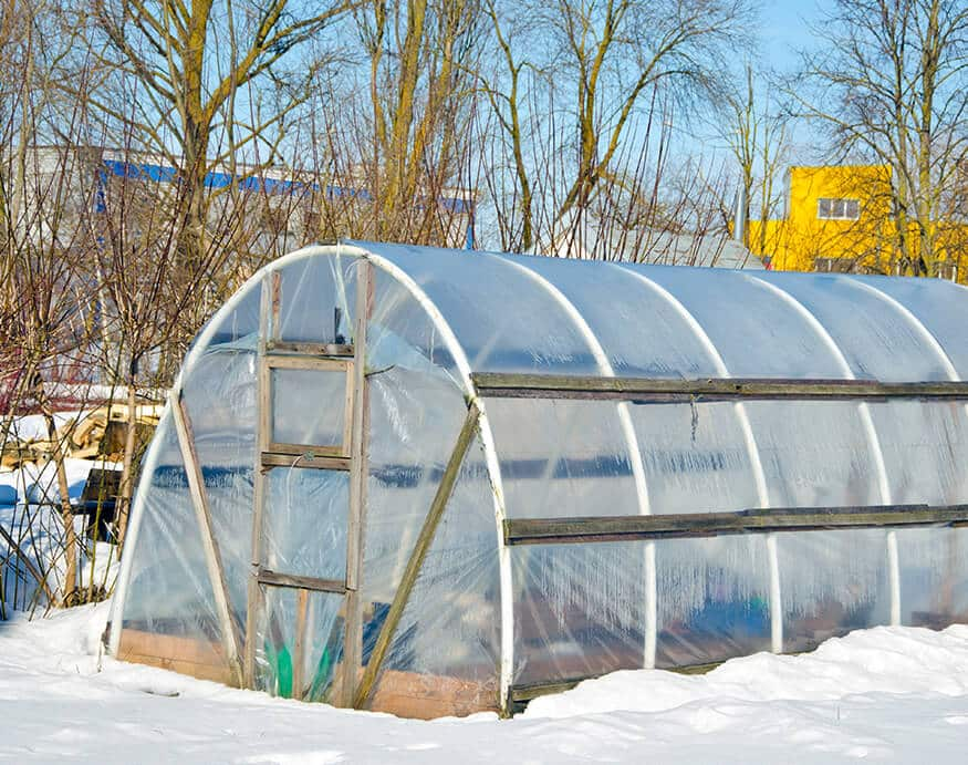 greenhouse during winter