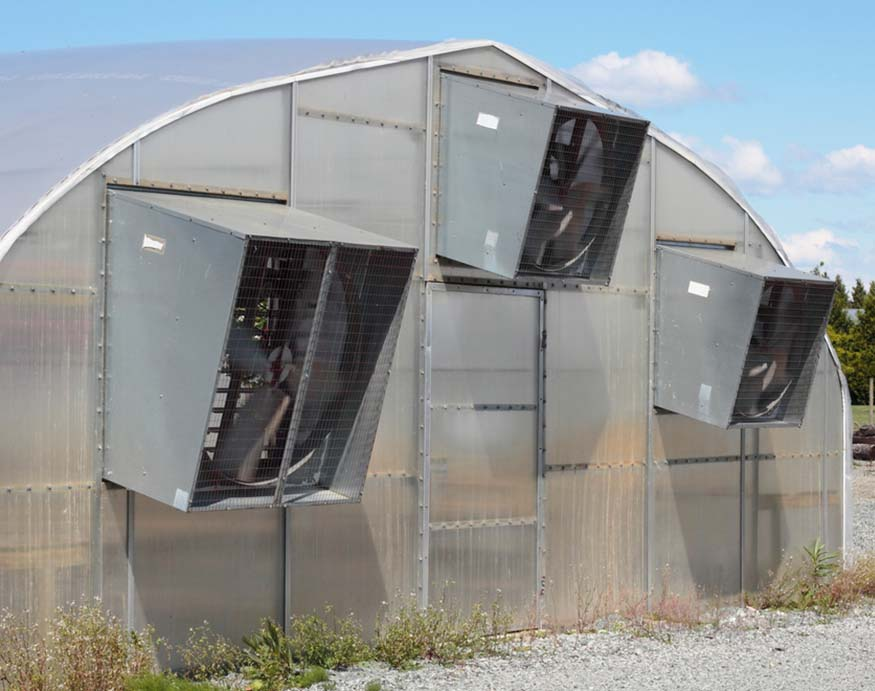 greenhouse with three exhaust fans