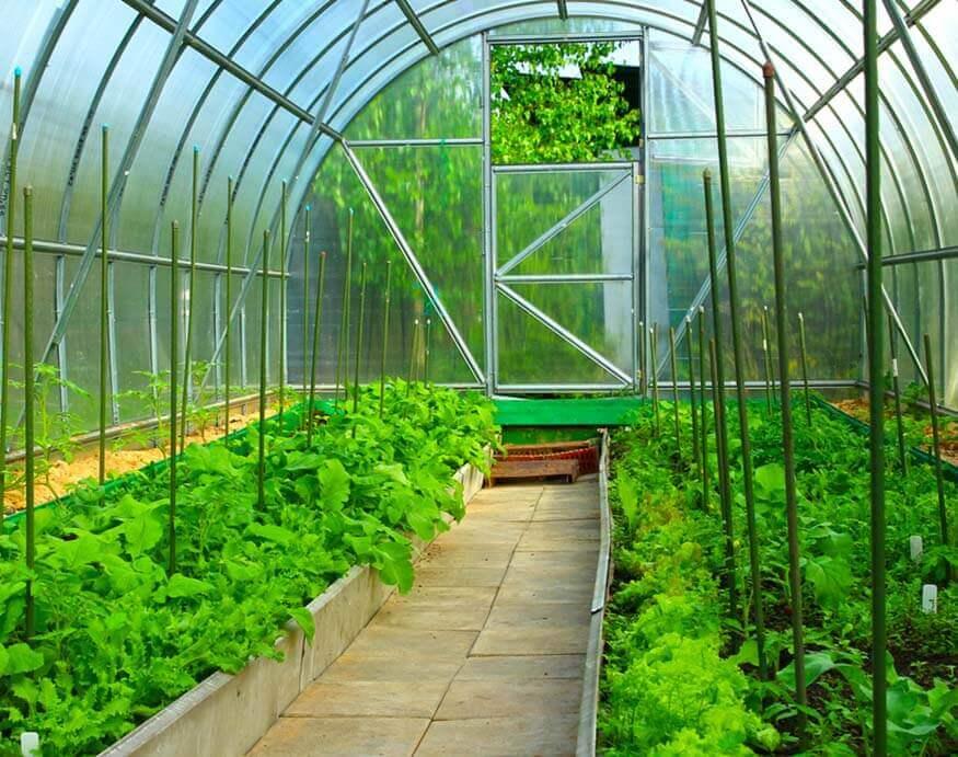 dense planting in a raised garden bed
