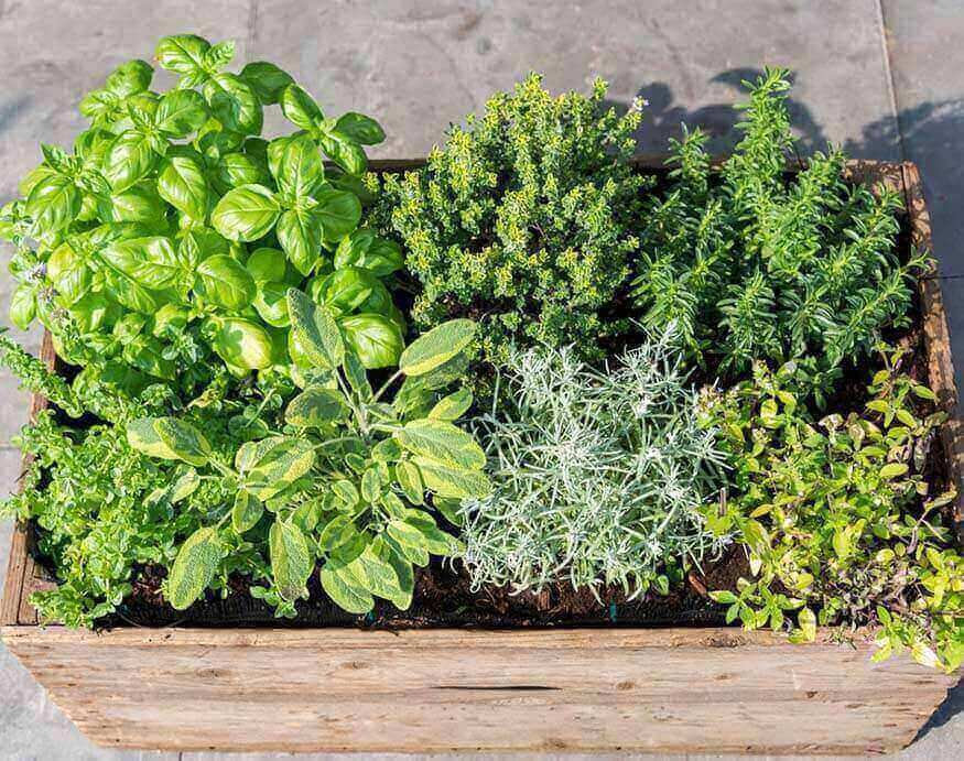 fresh herbs in a container