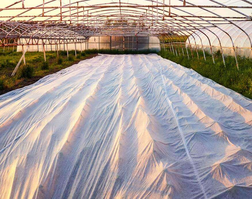 greenhouse plants and vegetables protected by plastic row covers