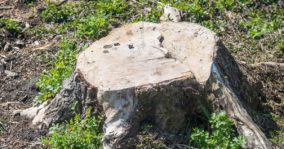 Which Is The Best Tree Stump Killer? Reviews and Buyers Guide