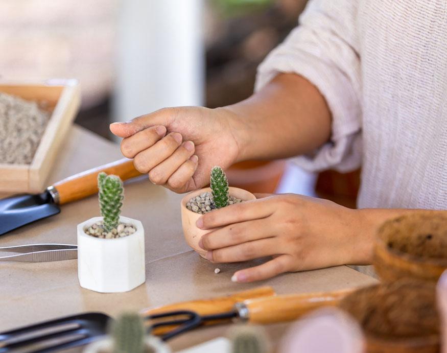woman adding fertilizer to cacti