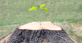 How to Kill a Tree Stump – 7 Ways