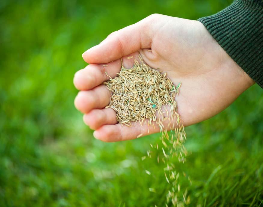 man throwing grass seeds to ground