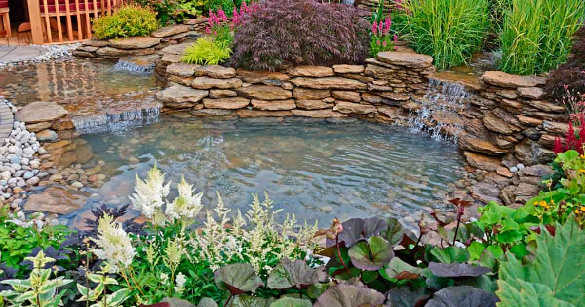 picture of a zen healthy and clean pond
