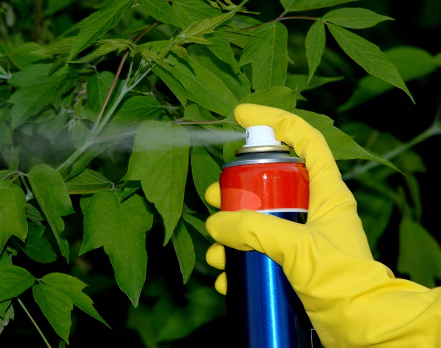 Spraying insecticide in the garden