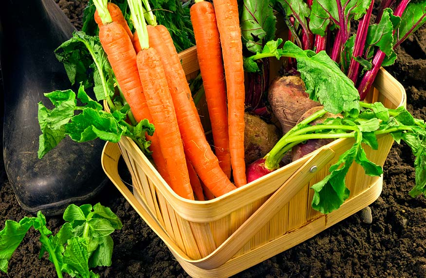 basket of fast growing vegetables