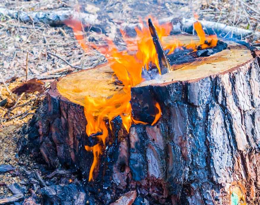 tree stump on fire