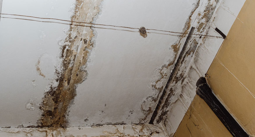 water damage leading to mold growth