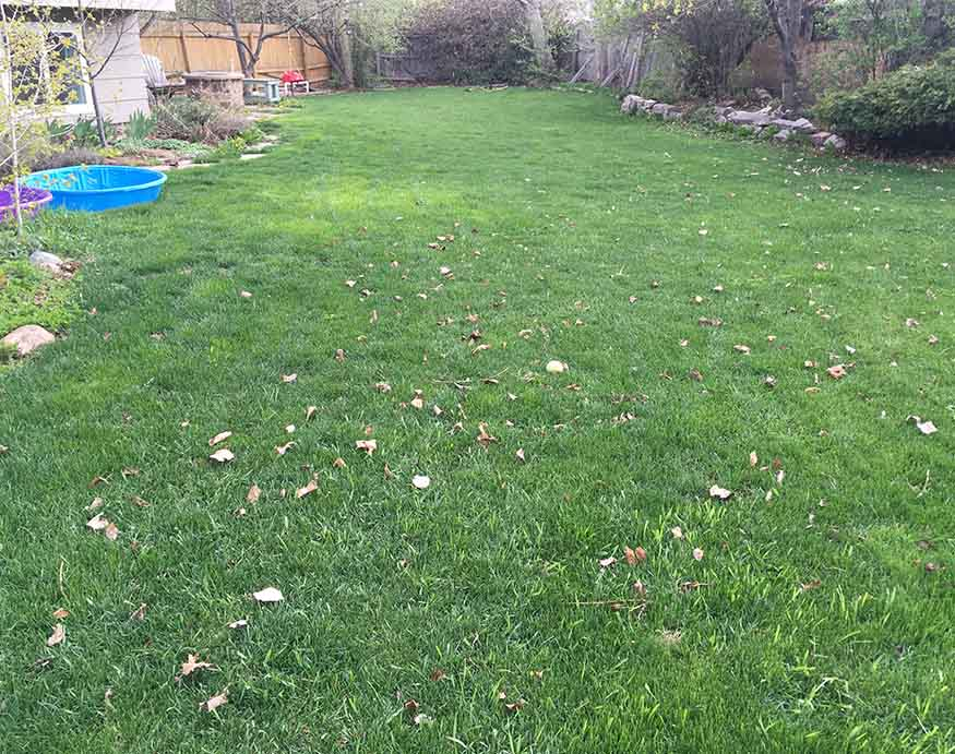After applying Sunday Lawn Care