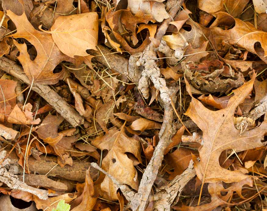 picture of dry leaves and twigs