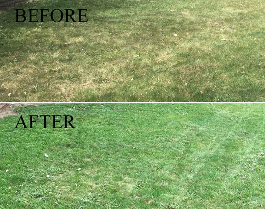 before and after using Sunday Lawn Care