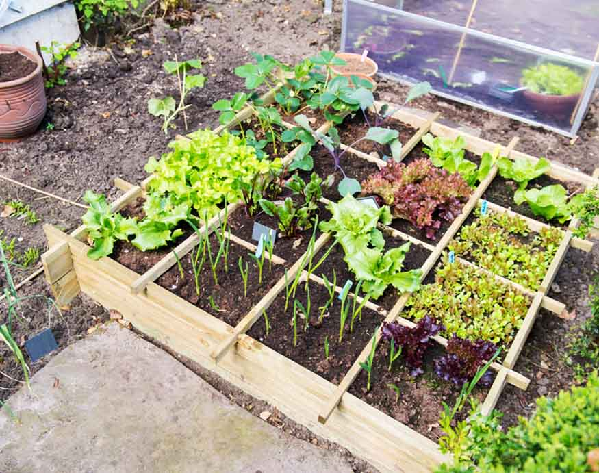 cold frame with different veggies