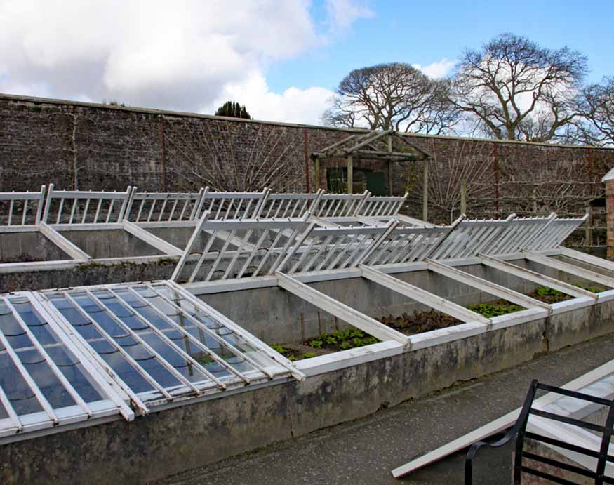 rows of cold frame