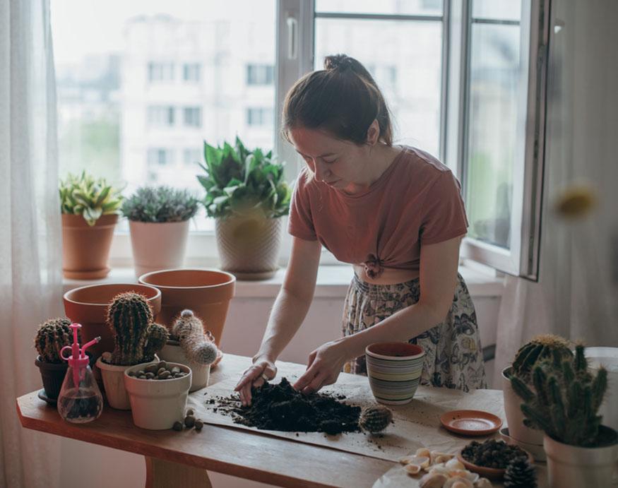 woman transplanting cacti