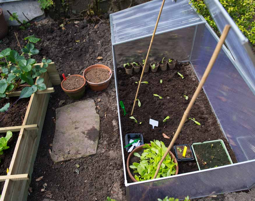 cold frame with seedlings