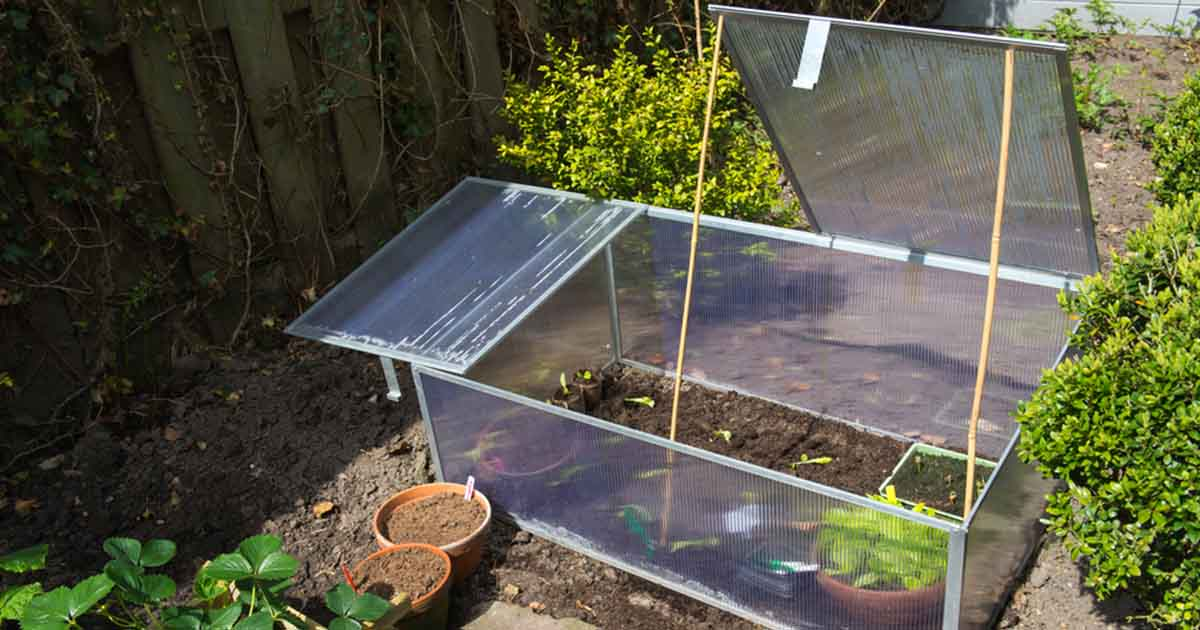 cold frame with plants