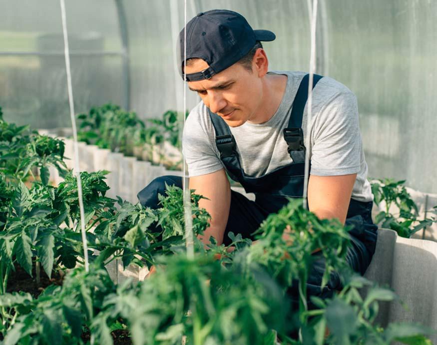 man checking his plants