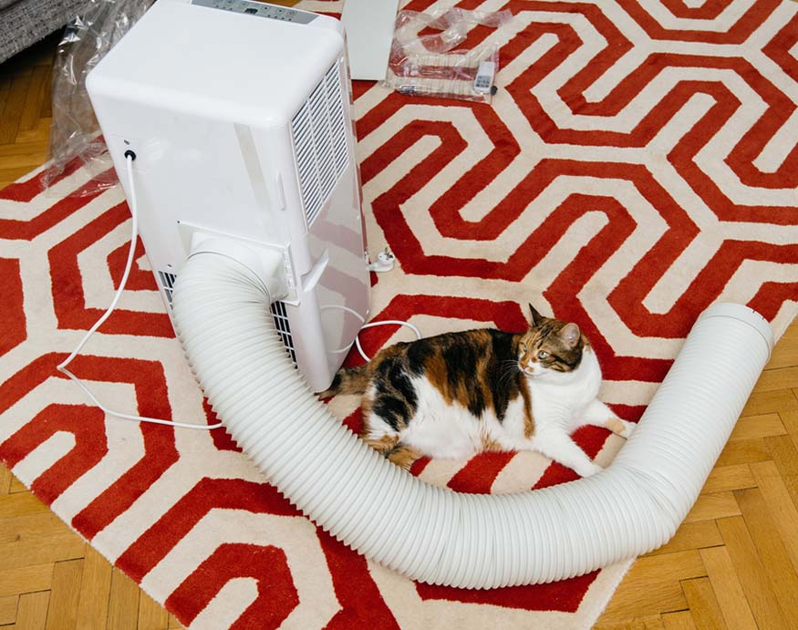 picture of a portable air conditioner with an exhaust hose and cat