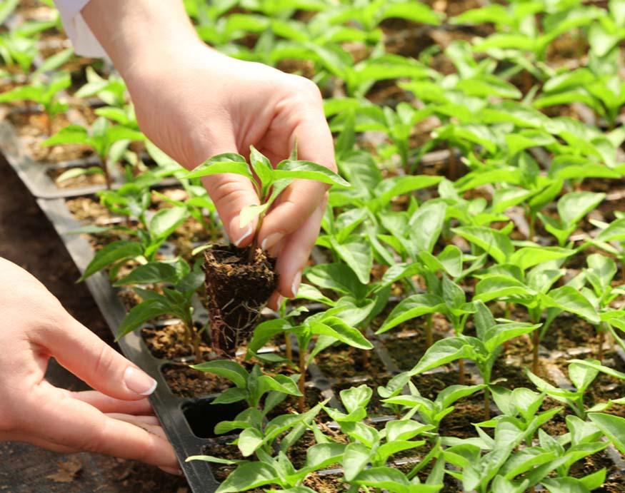 woman checking seedlings