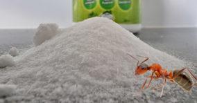 Borax for ants – How To Use Borax To Kill Ants