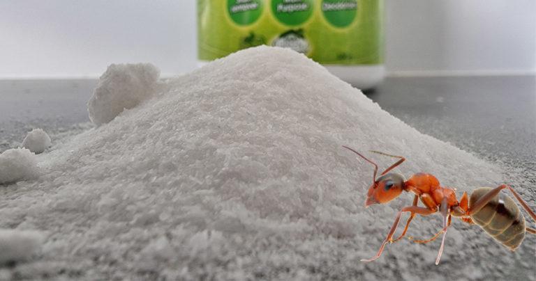 get rid of ants with borax hero