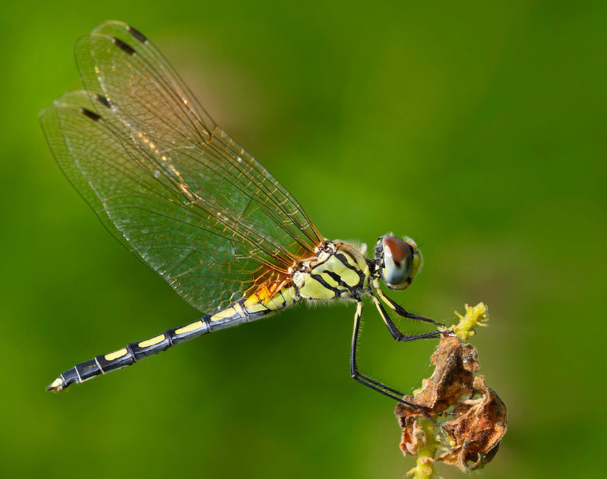 close-up picture of a dragonfly
