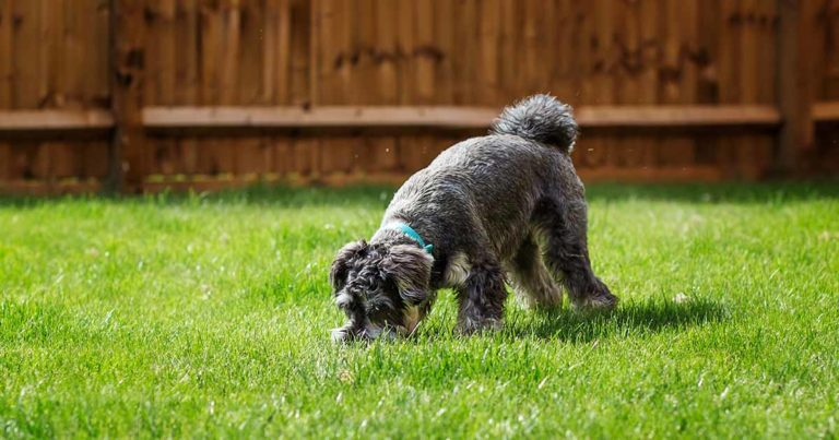 dog sniffing and exploring the garden