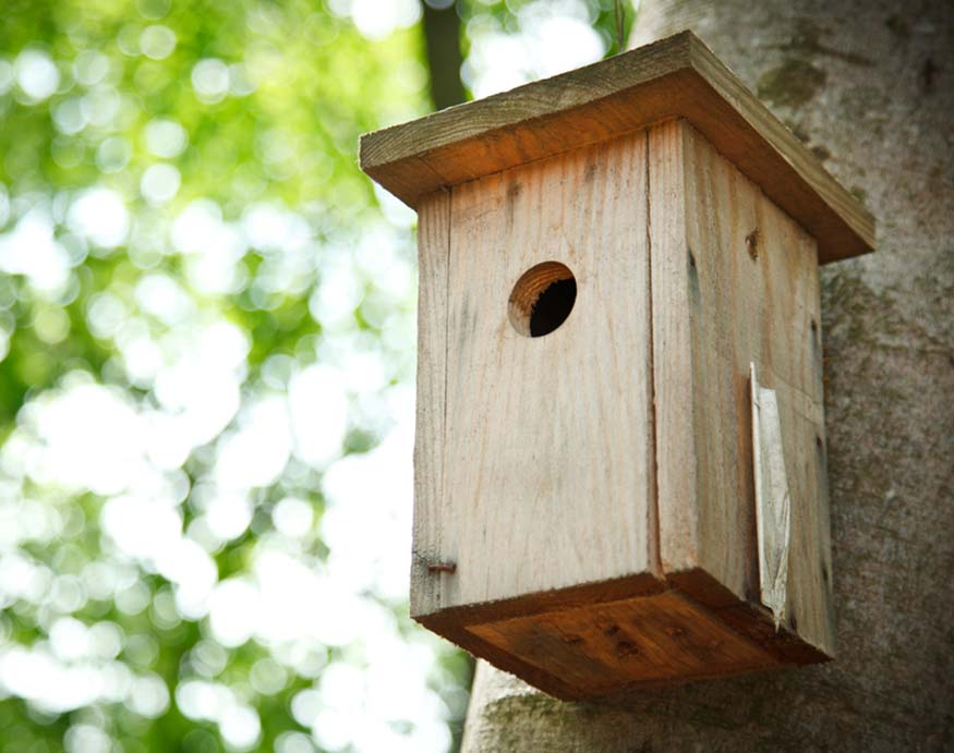 bird house hanging from a tree