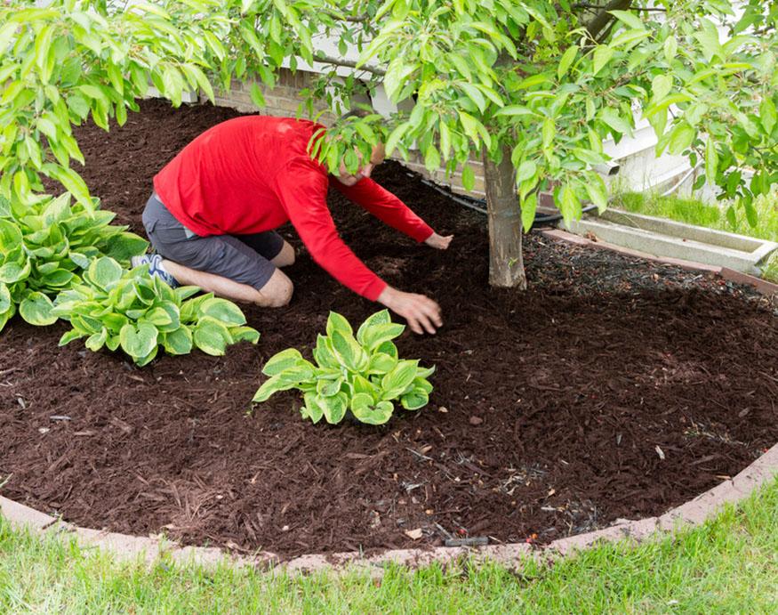 man mulching the garden