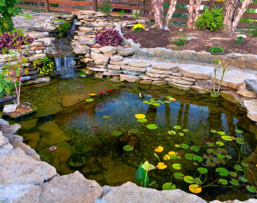adding mosquito-eating fish to a pond