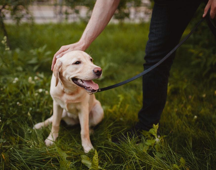 man with his labrador dog