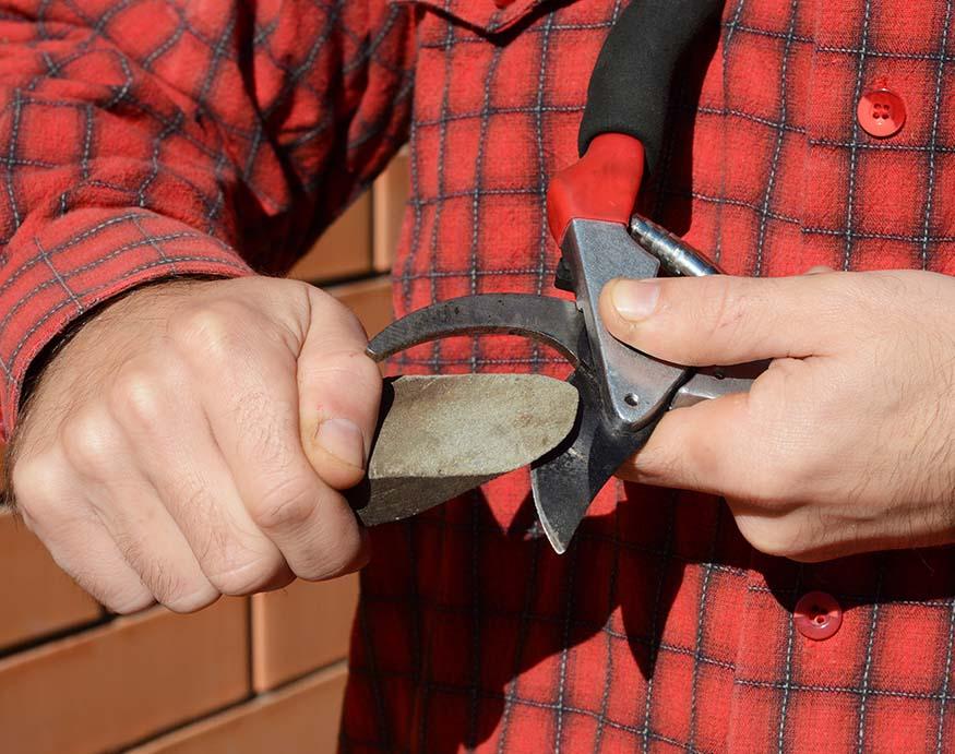 man sharpening pruning shears