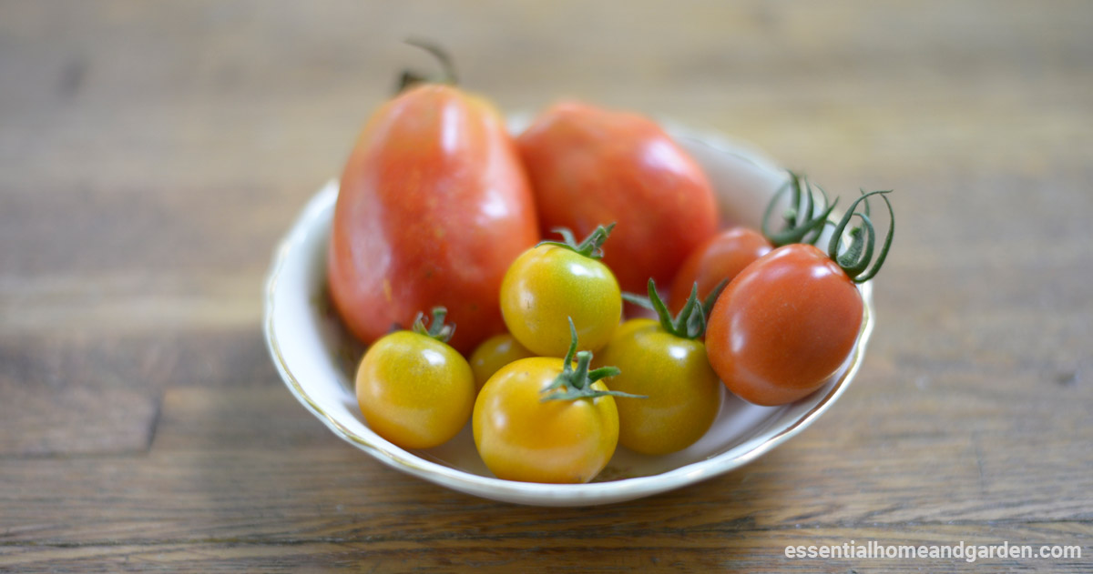 bowl of tomatoes grown indoors