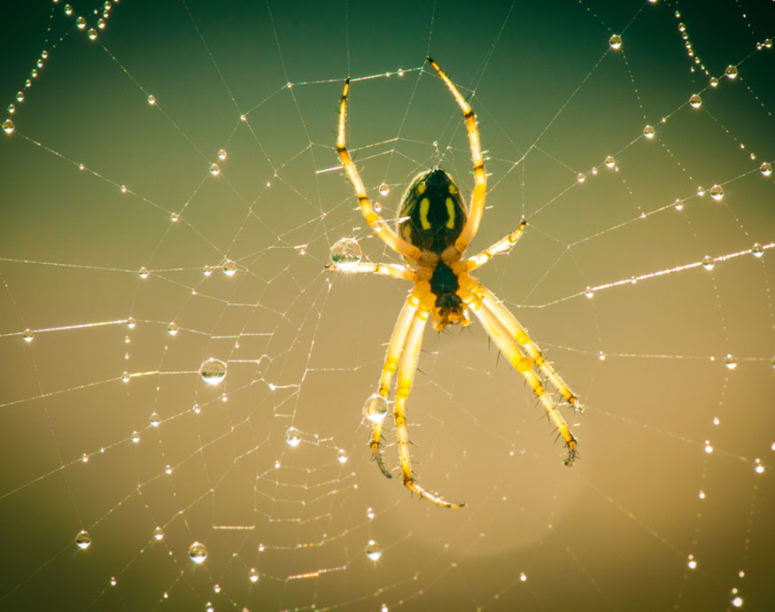 close-up photo of spider on its web