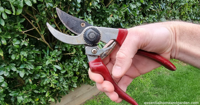 how to clean pruning shears