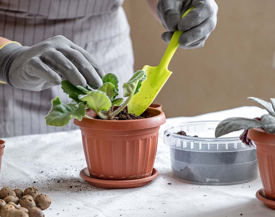 A gardener adding compost in a potted plant
