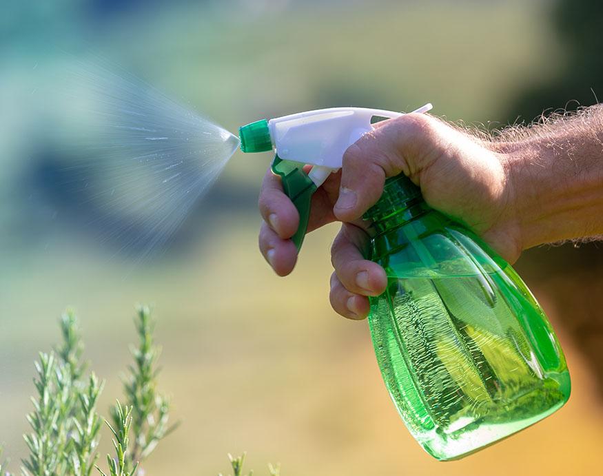 man spraying garlic-based ATSB on plants